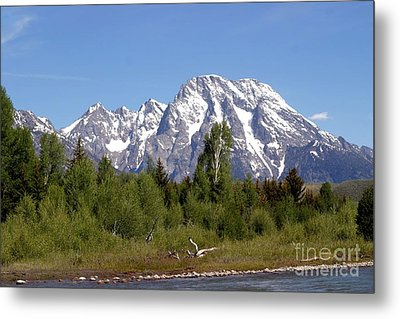 Driftwood And The Grand Tetons Metal Print by Living Color Photography Lorraine Lynch