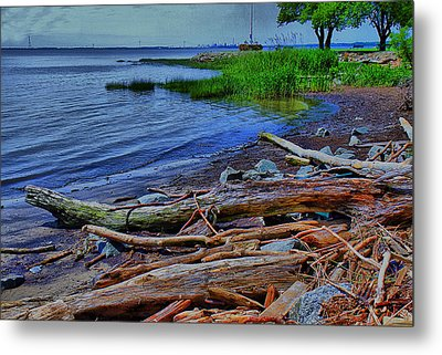 Driftwood On Shore Metal Print by Trudy Wilkerson