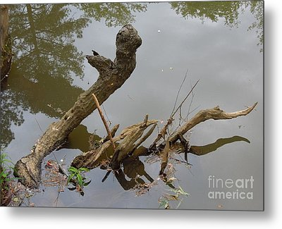 Metal Print featuring the photograph Driftwood by Renee Trenholm