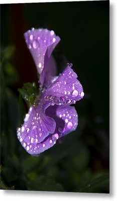 Drops Of Rain Metal Print by Svetlana Sewell