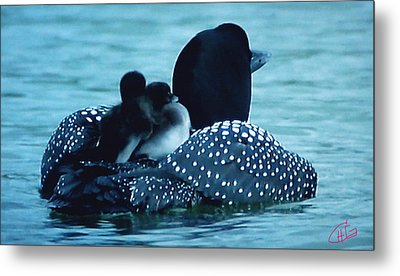 Duck Family Joy In The Lake  Metal Print