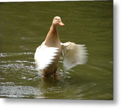 Metal Print featuring the photograph Duck Flapper by Wendy McKennon