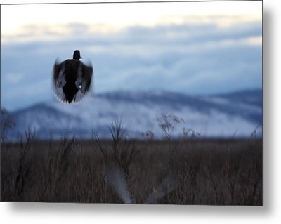 Duck Silhouette - 0001 Metal Print by S and S Photo