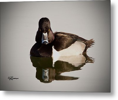 Duck With Attitude Metal Print by Jeff Swanson