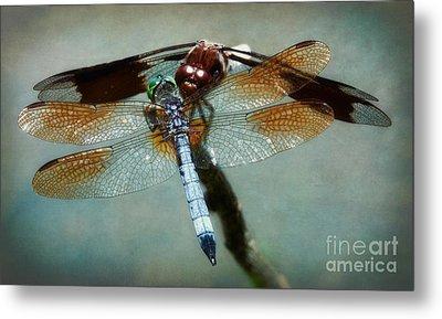 Dueling Dragonflies Metal Print by Susan Isakson