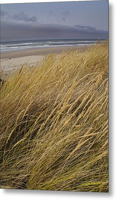 Dune Grass On The Oregon Coast Metal Print by Mick Anderson