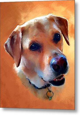 Dusty Labrador Dog Metal Print by Robert Smith