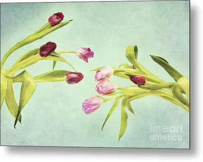 Eager For Spring Metal Print by Priska Wettstein