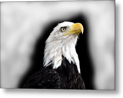 Eagle Metal Print by Barry Shaffer