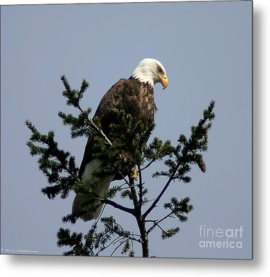 Metal Print featuring the photograph Eagle Eye Vista by Mitch Shindelbower