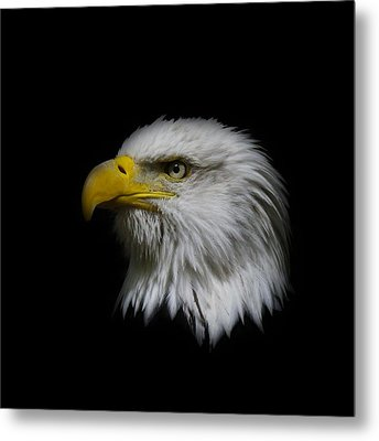 Metal Print featuring the photograph Eagle Head by Steve McKinzie