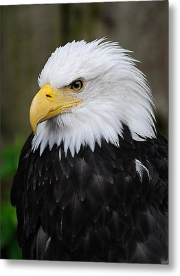 Eagle In Ketchikan Alaska 1371 Metal Print