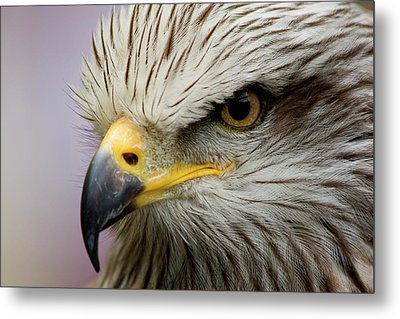 Eagle Metal Print by Javier Balseiro