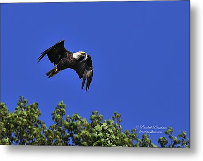 Metal Print featuring the photograph Eagle Over The Tree Top by Randall Branham