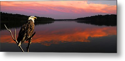Metal Print featuring the photograph Eagle Overlooking Domain by Randall Branham