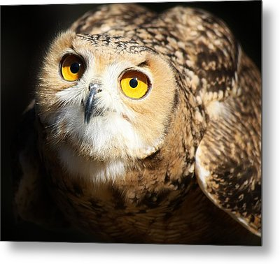 Eagle Owl Metal Print by Paulette Thomas