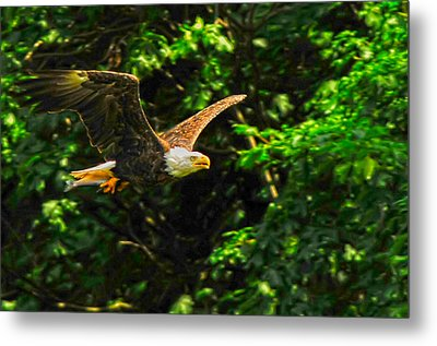 Metal Print featuring the photograph Eagle Taking Lunch To Her Babies by Randall Branham
