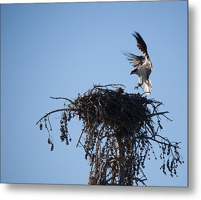 Eagle's Nest Metal Print by Ralf Kaiser