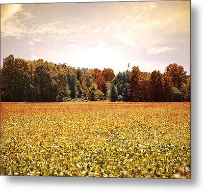 Early Autumn Harvest Landscape Metal Print by Jai Johnson