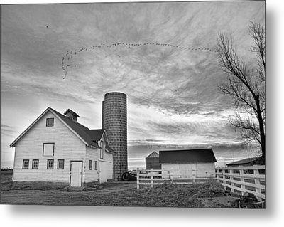 Early Morning On The Farm Bw Metal Print by James BO  Insogna