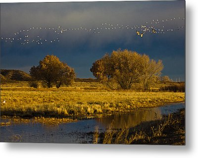 Early Morning Take Off Metal Print by Dorothy Cunningham