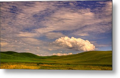 Early Summer Wheat In The Palouse Metal Print by David Patterson