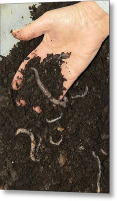 Earthworms In Soil Metal Print by Sheila Terry