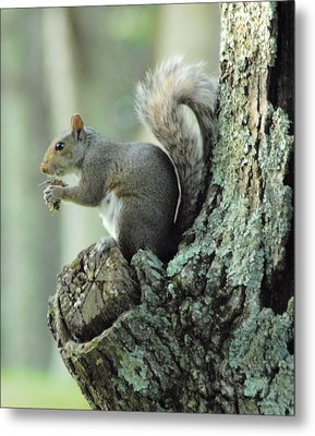 Eating Safely Metal Print by