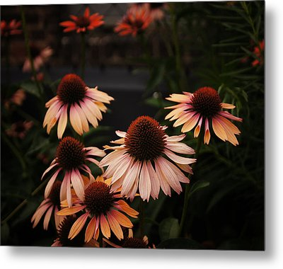 Echinacea Flowers Along The High Line Park - New York City Metal Print by Vivienne Gucwa