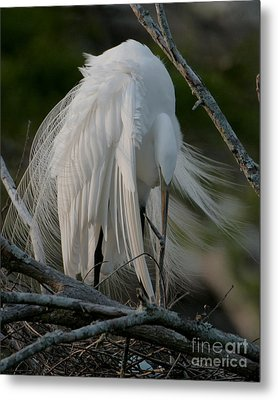 Metal Print featuring the photograph Egret - Mother And Eggs  by Luana K Perez