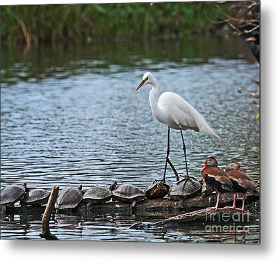 Egret Bird - Supporting Friends Metal Print