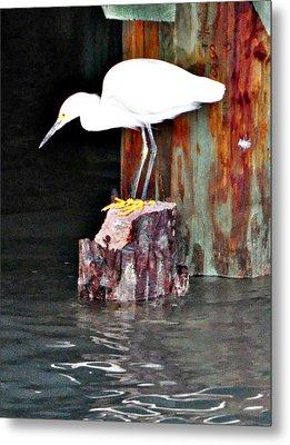 Egret Fishing Metal Print by John Collins