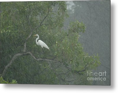 Egret In The Monsoons Metal Print by Bob Christopher