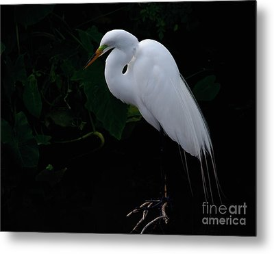 Egret On A Branch Metal Print by Art Whitton