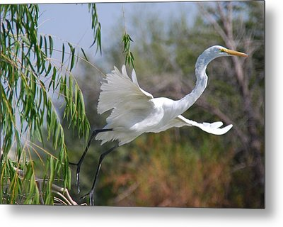 Metal Print featuring the photograph Egret's Flight by Tam Ryan