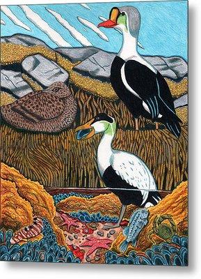 Eider Ducks Metal Print by John Meszaros