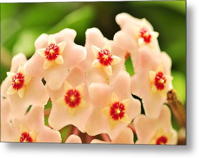 Metal Print featuring the photograph Eis A Hoya by Puzzles Shum