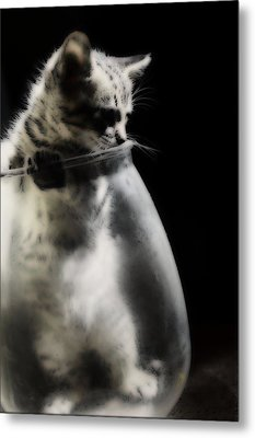 Metal Print featuring the photograph El Kitty by Jessica Shelton