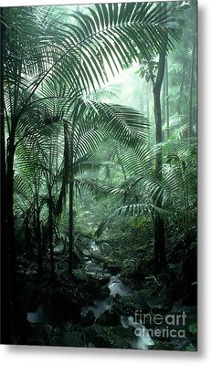 El Yunque National Forest Palms And Stream Metal Print by Thomas R Fletcher