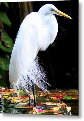 Elegant Egret At Water's Edge Metal Print