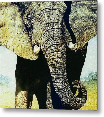 Elephant Close-up Metal Print by Hartmut Jager