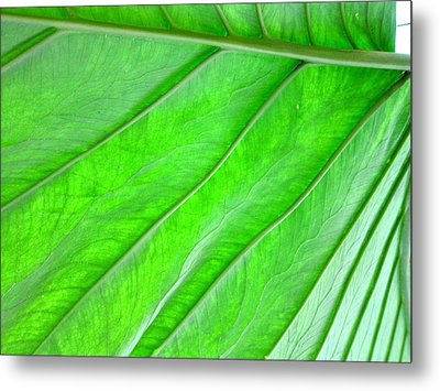 Elephant Ear Plant Leaf Metal Print