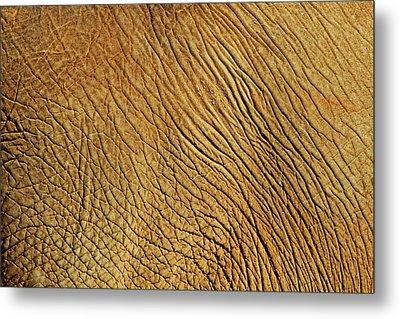 Elephant Skin Metal Print by Daniela Duncan
