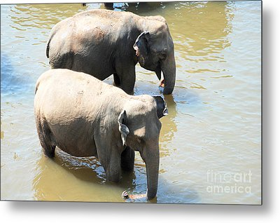 Metal Print featuring the photograph Elephants In Water by Pravine Chester