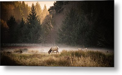 Elk Camp Metal Print by Randy Wood