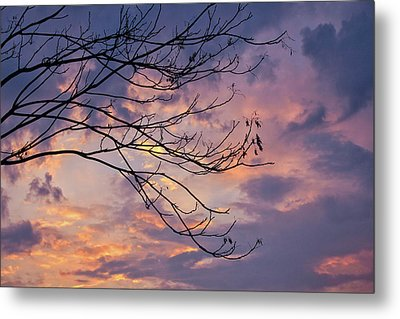 Enchanted Evening Metal Print by Rachel Cohen