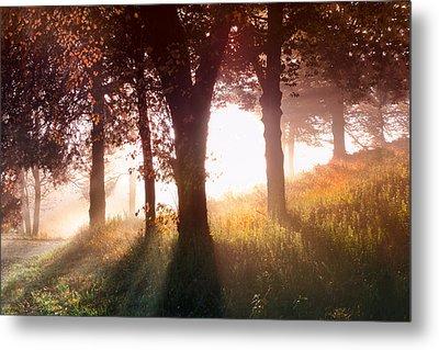 Enchanted Meadow Metal Print by Debra and Dave Vanderlaan