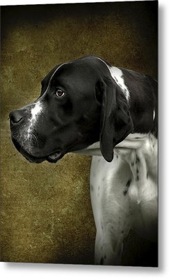 English Pointer Dog Portrait Metal Print