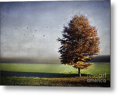 Enjoying The Autumn Sun Metal Print by Hannes Cmarits