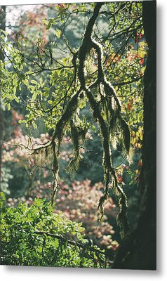 Epiphytic Moss Metal Print by Doug Allan